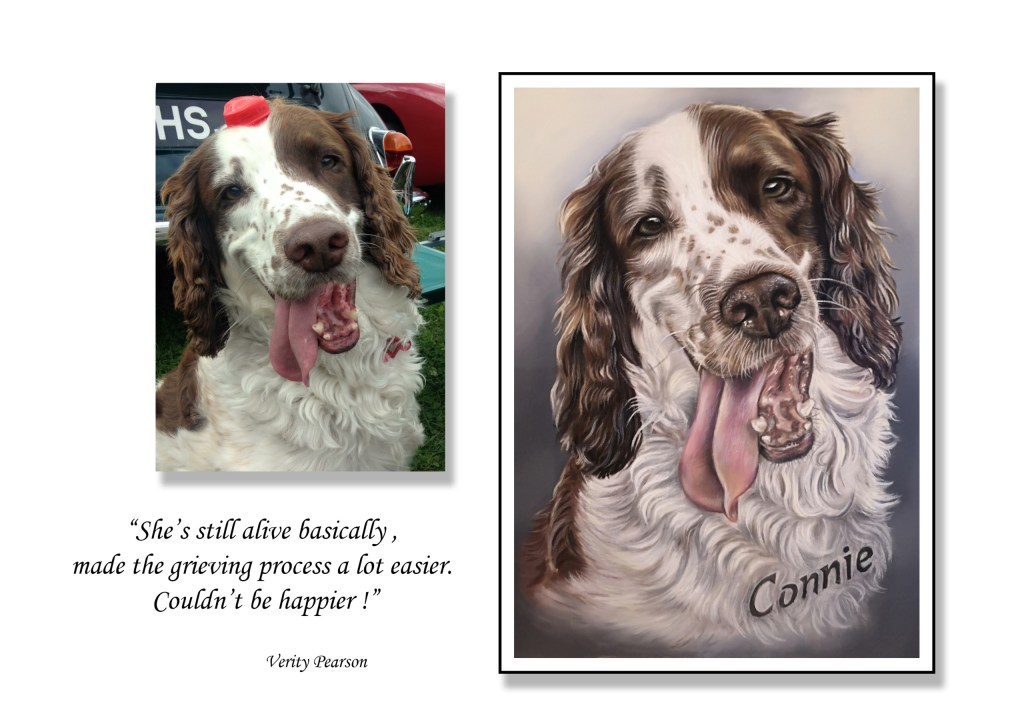 Springer spaniel Connie