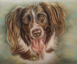 Alfie portrait