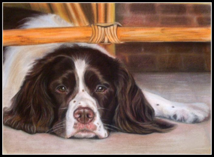 Springer Spaniel 1 framed