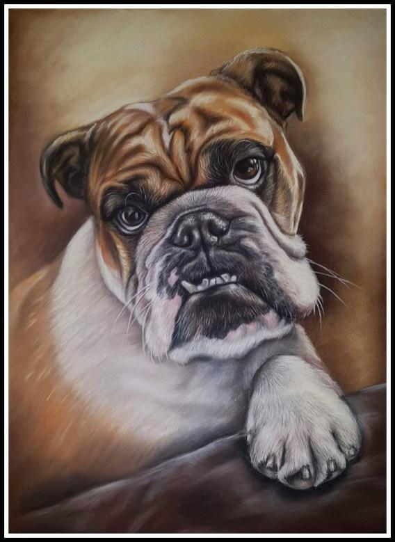 Broxi pet portrait