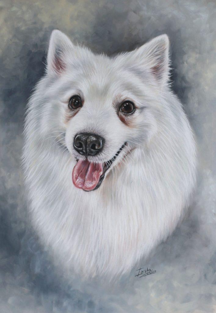 Japanese Spitz portrait painting uk