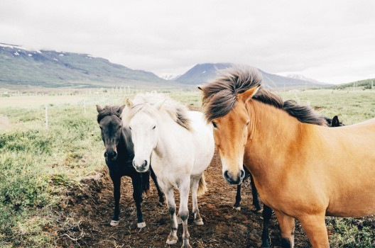 How much does it cost to rescue a horse?