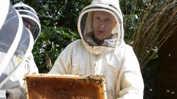 To bee or not to bee in an Irish monastery