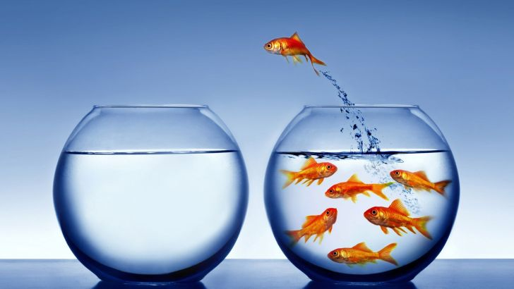Living your life beyond the fish tank