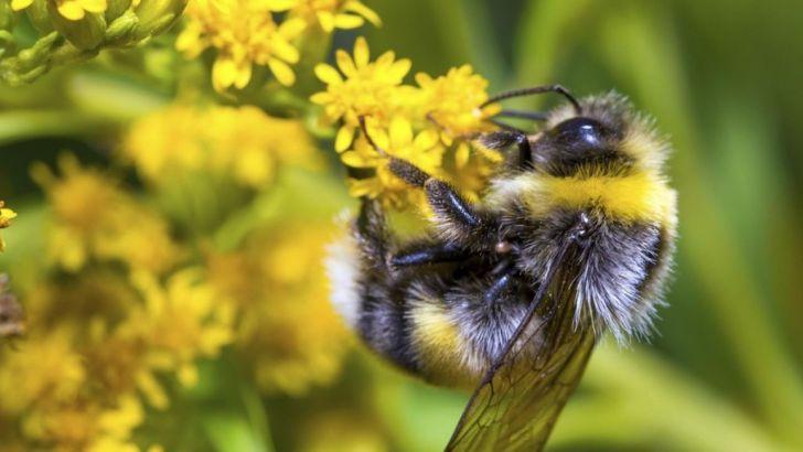 Consider planting something for endangered pollinators