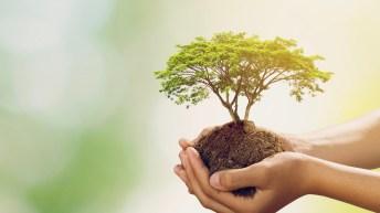 Eco-friendly families