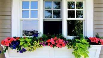 Jazzing up your window boxes