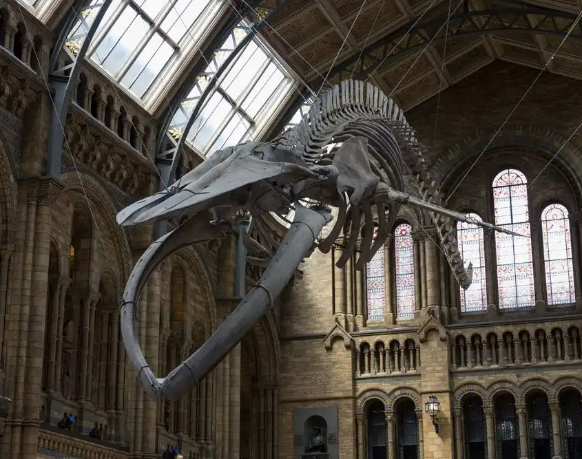 Natural History Museum - London Rugby Tours