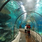 Barcelona Aquarium - Rugby Tours To Barcelona, Irish Rugby Tours