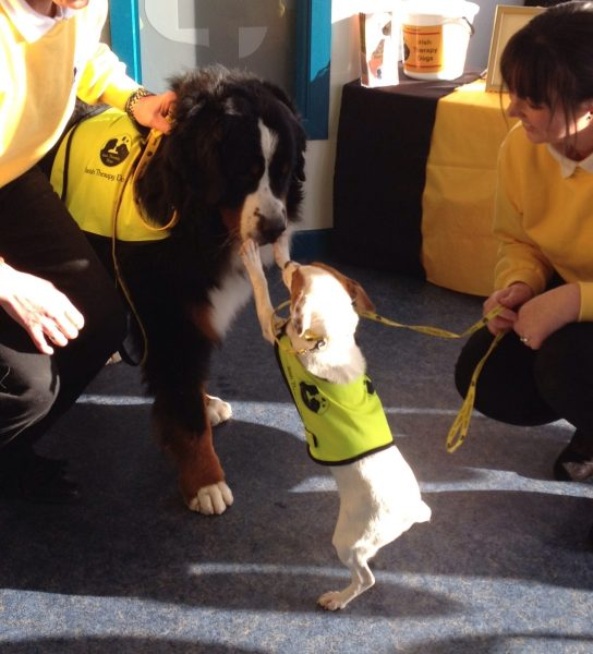 Awareness Day, Passage West Veterinary Clinic