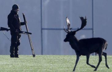 Urban deer cull riles Irish antis