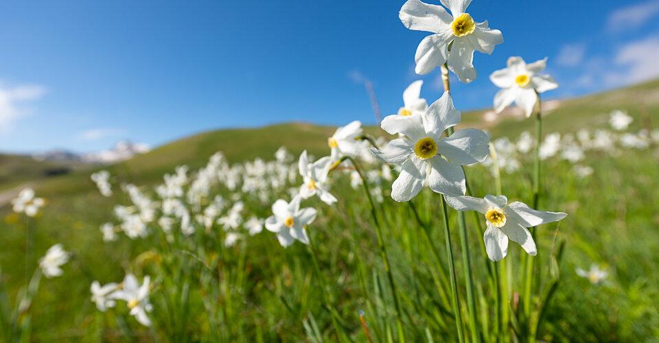 lago-pantaniello-primavera