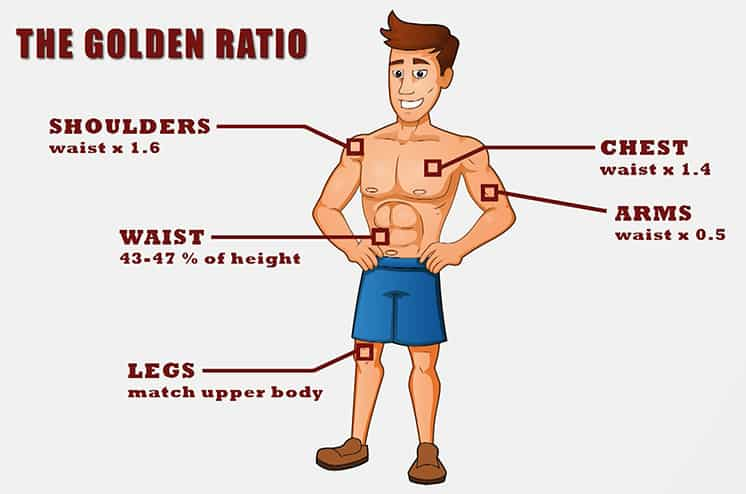The-Golden-Ratio-aesthetic-physique