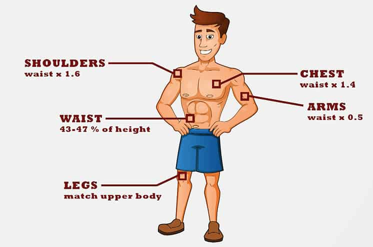 what is considered the perfect male body   the adonis