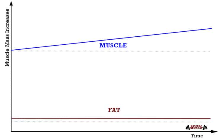 Gain-Muscle-With-Minimal-Fat