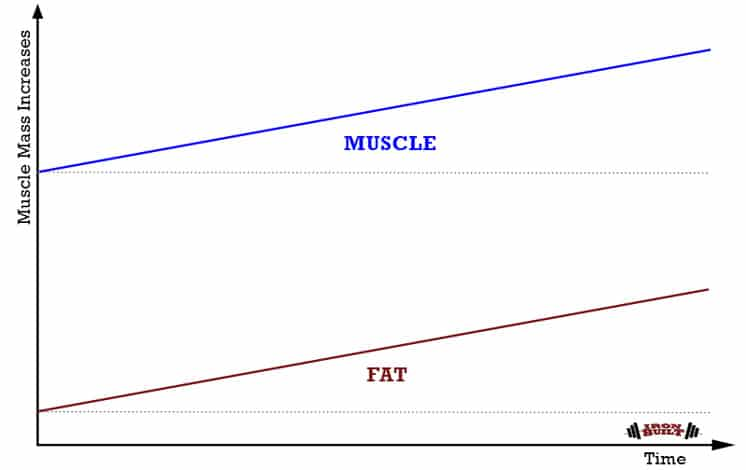 Maximize-Muscle-Growth
