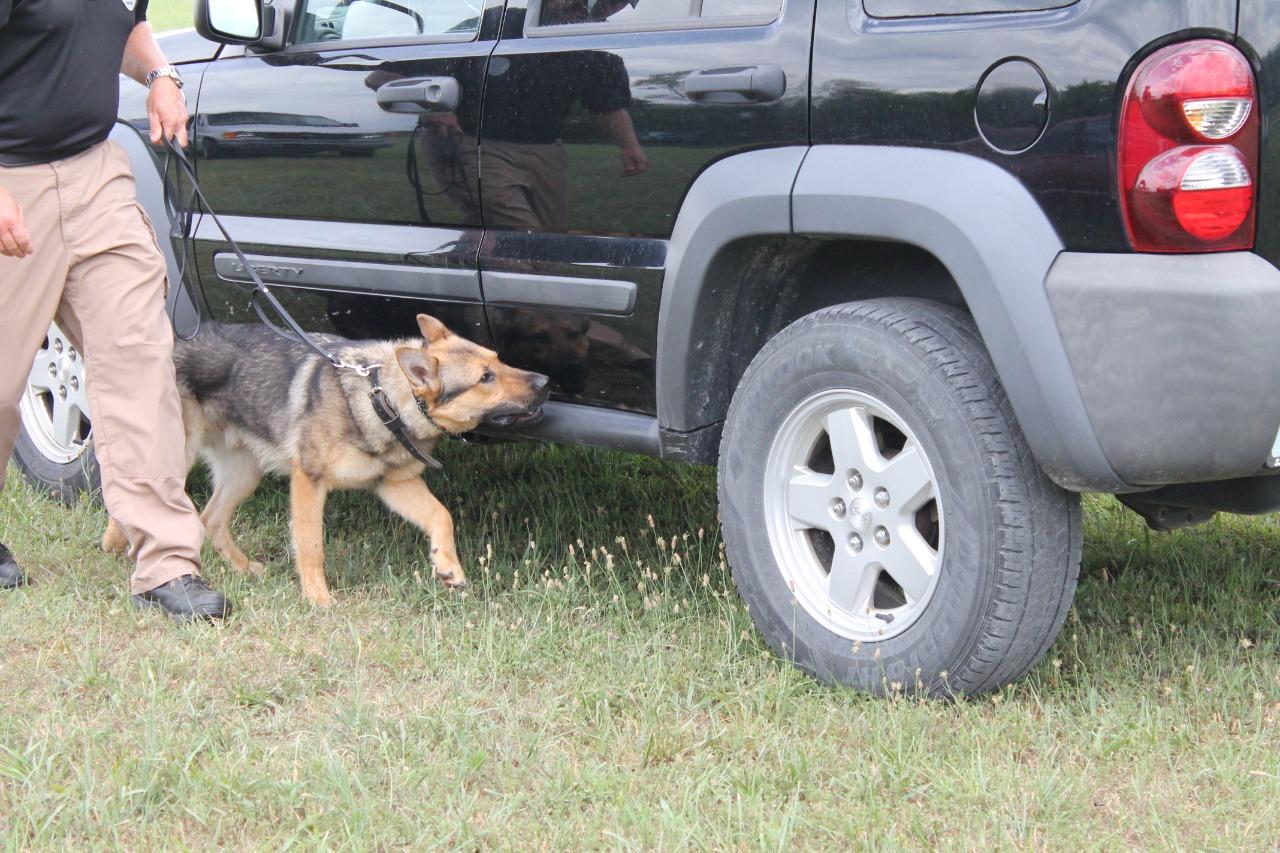 Raising the bar on bomb dog training