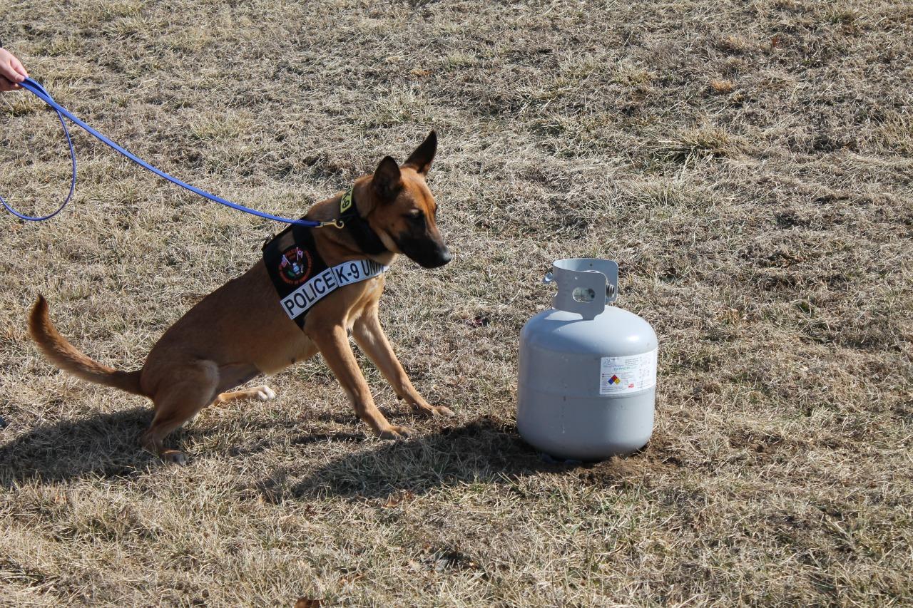 The Evolution of an Explosives Detector Dog Team