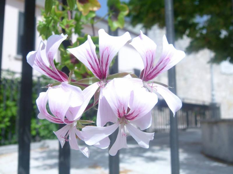 Terra delle madri fiori morra