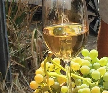 fiano e uva