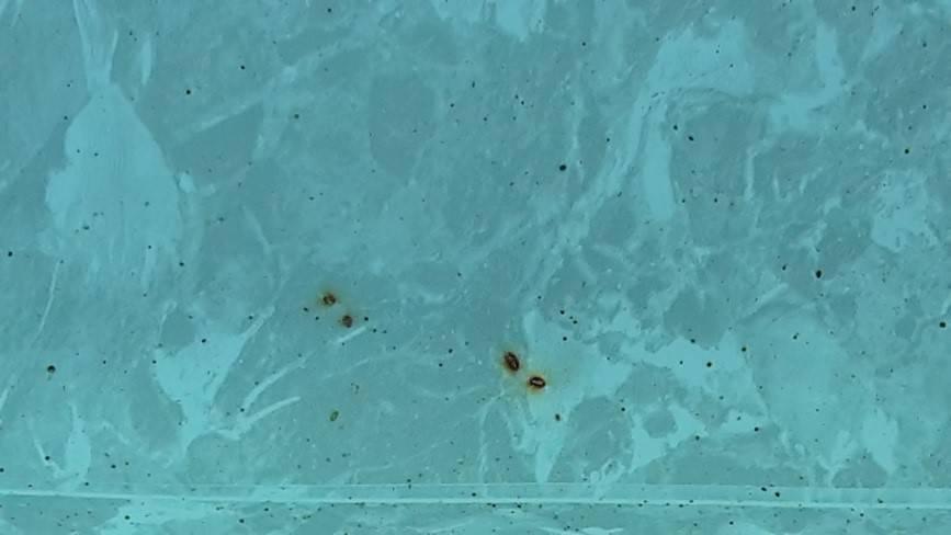 Elle se dépose au fond ou sur les parois du bassin et se détache du fond de la piscine quand on passe le balai. Divers Produits Piscine