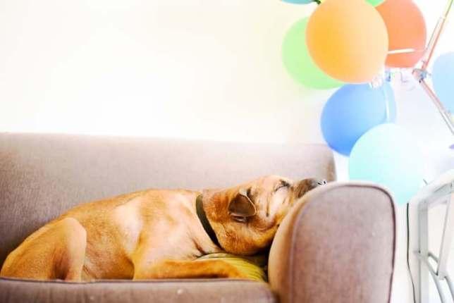 chien fatigué