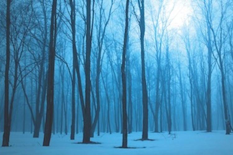 Une forêt bleutée, où on voit le ciel à travers les arbres
