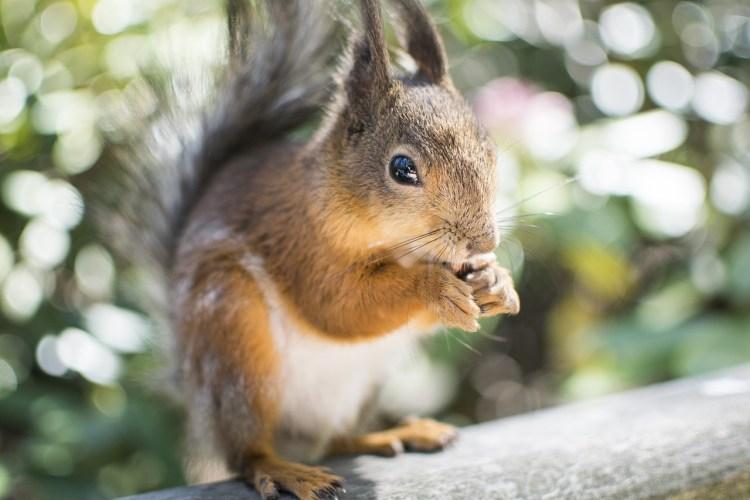 La biodiversité, c'est des mammifères, mais encore davantage d'animaux ou de plantes qu'on connaît peu ou pas du tout.