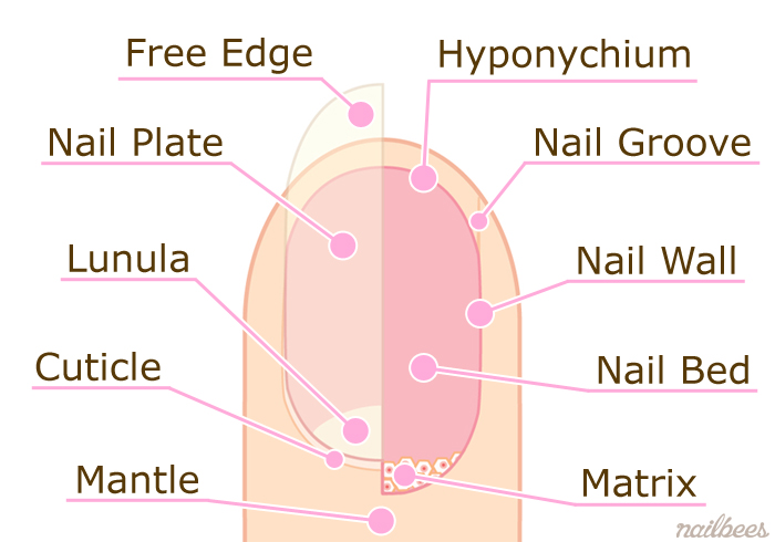 Bed Blank Nail Diagram