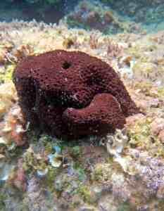 Η αξία των σπόγγων για τα θαλάσσια οικοσυστήματα