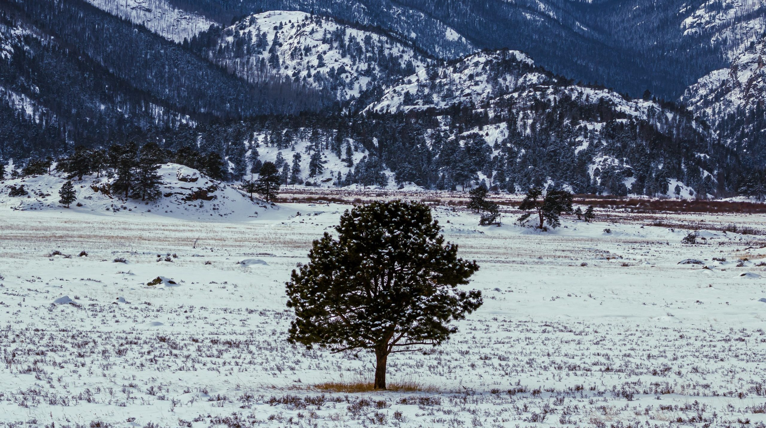 Lone tree in Rocky Mountain National Park