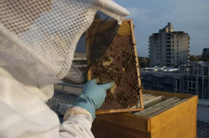 Bienen_Isarblog_8