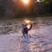 Sommerhunde: Eure Tipps für heiße Tage