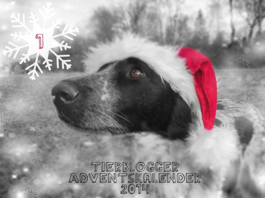 Tierblogger Adventskalender 2014 Türchen 1: Isarhunde