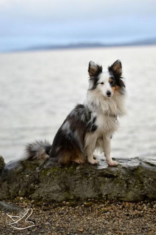 Frieda ist ein echter Seehund. Foto: Philomela / Friedas Welt