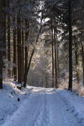 Ab in den verwunschenen Wald