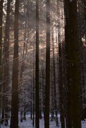 Unterwegs im Winterwunderwald