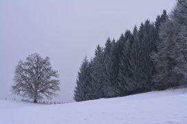 Auf Wiedersehen, Winterwunderland!