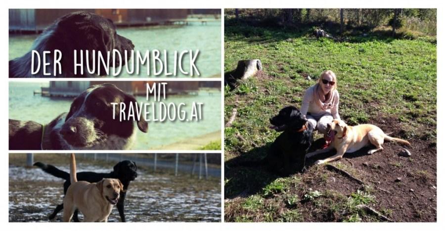 Der Hundumblick: Traveldog.at