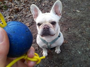 Wili und der Ball. Foto: Fiffibene