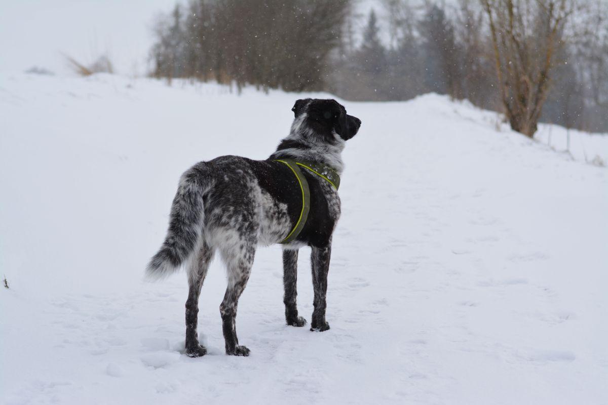 Isarhunderunde 13: Der Ammersee Höhenweg im Schnee