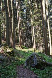 Durch den Wald in Richtung Wolfsschlucht