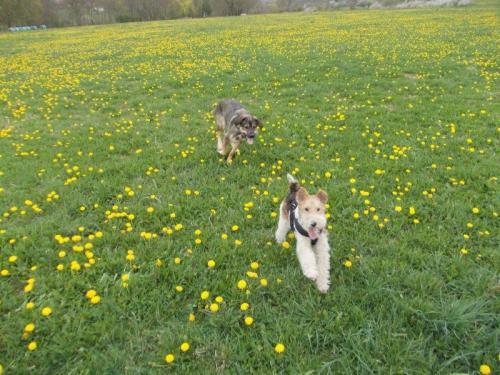 Ohne Freilaufflächen lässt sich schlecht sausen - da heißt es nach Ausweichmöglichkeiten für Treffen mit Hundekumpels suchen. Foto: Erlebnisse mit Chris