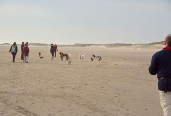 Strandläufer unterwegs