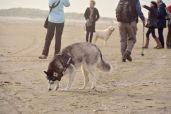 Misha untersucht den Sand