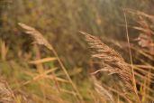 Fauna bei den Horsmeertjes