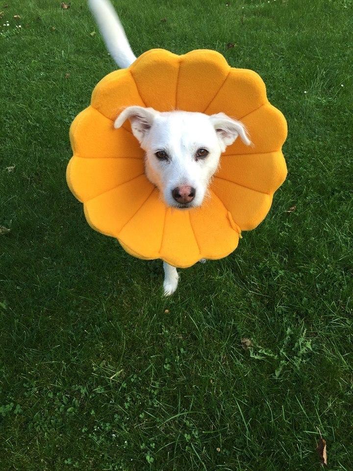 """Das Bloomy (Modell """"Sunny"""") im Einsatz. Foto: © Bloomy / Frau """"von"""""""