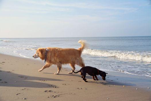 Unterwegs am Strand bei De Koog