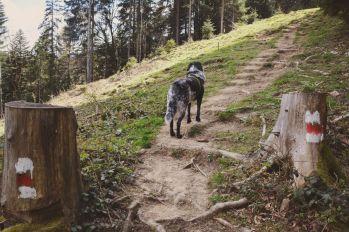 Mika erobert den Berg.