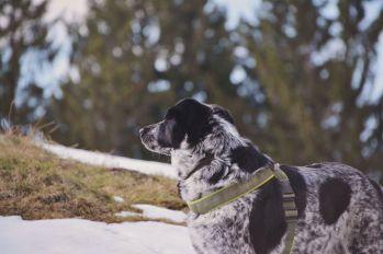 Mika freut sich über den Schnee in den höheren Lagen.